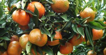 đặc sản trái cây kiên giang