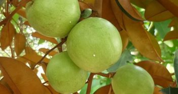 đặc sản trái cây miền Tây 5