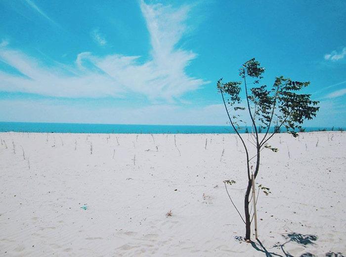 Cồn cát trắng xóa ở Bàu Trắng - Bình Thuận