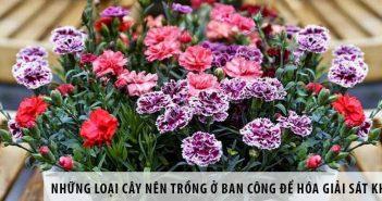 Những loại hoa nên trồng trong nhà giúp thư giãn tinh thần